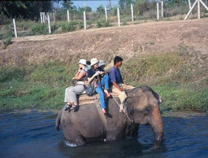 Jungle Safari in Nepal Information: Elephant, Lodge, Tours