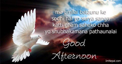 24 Good Afternoon Sms In Nepali Quotes Messages